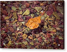 Floating Leaf Acrylic Print