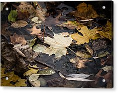 Floating Leaves Acrylic Print