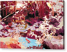 Floating Lilies Pads Above The Koi. Acrylic Print by Judy Loper