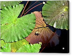 Floating Lily Pads Acrylic Print