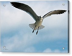 Floating On Air Acrylic Print by Christopher Holmes