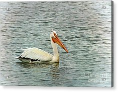 Floating Pelican Acrylic Print by Krista-
