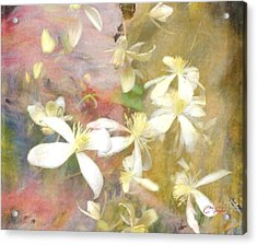 Floating Petals Acrylic Print by Colleen Taylor