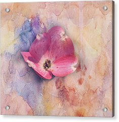 Acrylic Print featuring the photograph Floating Pink Bloom by Toni Hopper