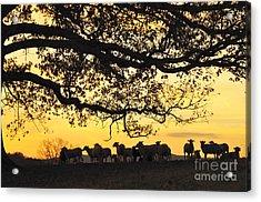 Flock At Sunrise Acrylic Print by Thomas R Fletcher