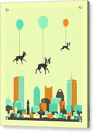 Flock Of Boston Terriers  Acrylic Print by Jazzberry Blue