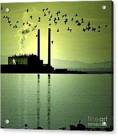 Flock Of Gulls Acrylic Print by Craig B