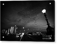 Flock Of Starlings Flying In Murmuration Over Lamp On Albert Bridge Belfast Northern Ireland Uk Acrylic Print