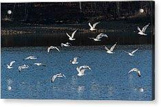 Flock Of Them Acrylic Print