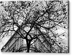 Flood Building - San Francisco - Corner Tree View Black And White Acrylic Print