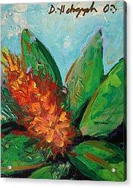 Flora Exotica B Acrylic Print by Dodd Holsapple
