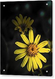 Flora In Yellow Acrylic Print