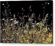 Acrylic Print featuring the photograph Flora Play II by HweeYen Ong