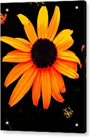 Floral 1 Acrylic Print by Chuck Landskroner