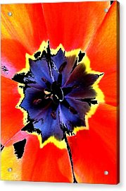 Floral 1229 Acrylic Print by Chuck Landskroner