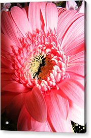 Floral 41 Acrylic Print by Chuck Landskroner