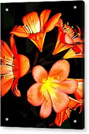 Floral 6019 Acrylic Print by Chuck Landskroner