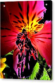 Floral 711 Acrylic Print by Chuck Landskroner