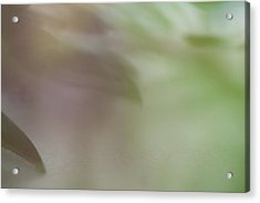 Acrylic Print featuring the photograph Floral Abstract by Roger Mullenhour