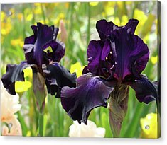 Floral Art Deep Purple Iris Flowers Irises Baslee Troutman Acrylic Print by Baslee Troutman