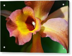 Floral Art - Intimate Orchid 3 - Sharon Cummings Acrylic Print by Sharon Cummings