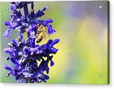 Floral Art - Spring Fever - Sharon Cummings Acrylic Print by Sharon Cummings