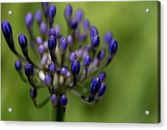 Acrylic Print featuring the photograph Floral Bits by Lora Lee Chapman