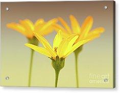 Floral Brilliance Acrylic Print