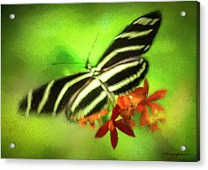 Floral Butterfly Acrylic Print by Marvin Spates