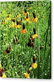Acrylic Print featuring the photograph Floral by Cynthia Powell