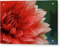 Floral Delight Acrylic Print by Mike Martin