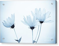 Floral Elegance Acrylic Print