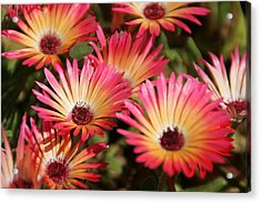 Floral Expectancy Acrylic Print by Andrea Jean