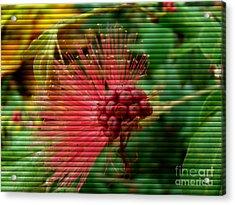 Floral Fan Acrylic Print