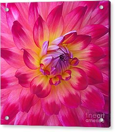 Floral Fantasia Acrylic Print