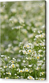 Floral Field #1 Acrylic Print