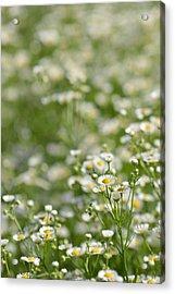 Floral Field #1 Acrylic Print