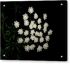 Floral Fireworks Acrylic Print by Debbie May