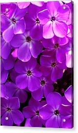Floral Glory Acrylic Print by David Lane
