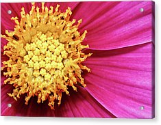 Acrylic Print featuring the photograph Floral Heart by Dawn Currie
