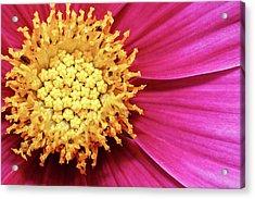 Floral Heart Acrylic Print