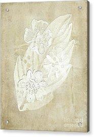 Floral Imprints Acrylic Print by Judy Hall-Folde