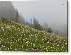 Floral Meadow Acrylic Print