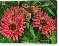 Acrylic Print featuring the photograph Floral Pink by Deborah Benoit
