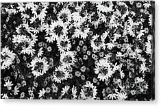Floral Texture In Black And White Acrylic Print