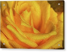 Acrylic Print featuring the photograph Floral Yellow Rose Blossom by Shelley Neff