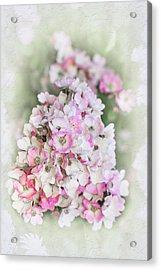 Florence Acrylic Print by Elaine Teague