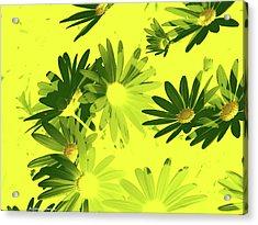 Flores De Primavera Acrylic Print by Alfonso Garcia