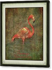 Acrylic Print featuring the photograph Florida Art by Hanny Heim