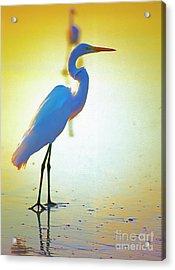 Florida Atlantic Beach Ocean Birds  Acrylic Print